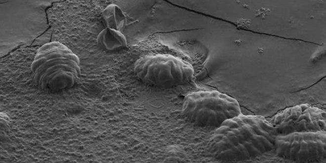 tardigrades-secs-anhydrobiose-lepangolin-com