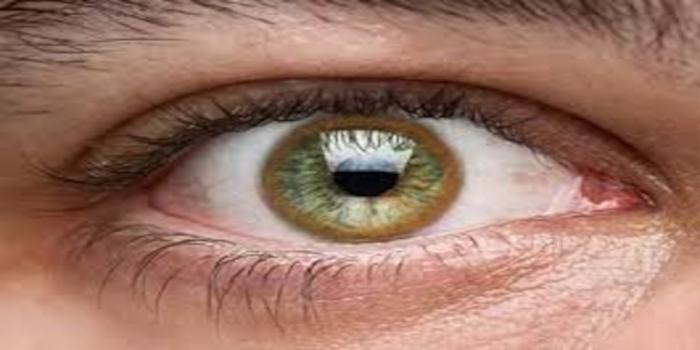 couleur-des-yeux-en-biologie-maladie-wilson-lepangolincom