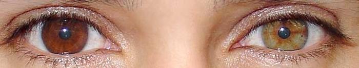 couleur-des-yeux-en-biologie-yeux-vairons-lepangolincom